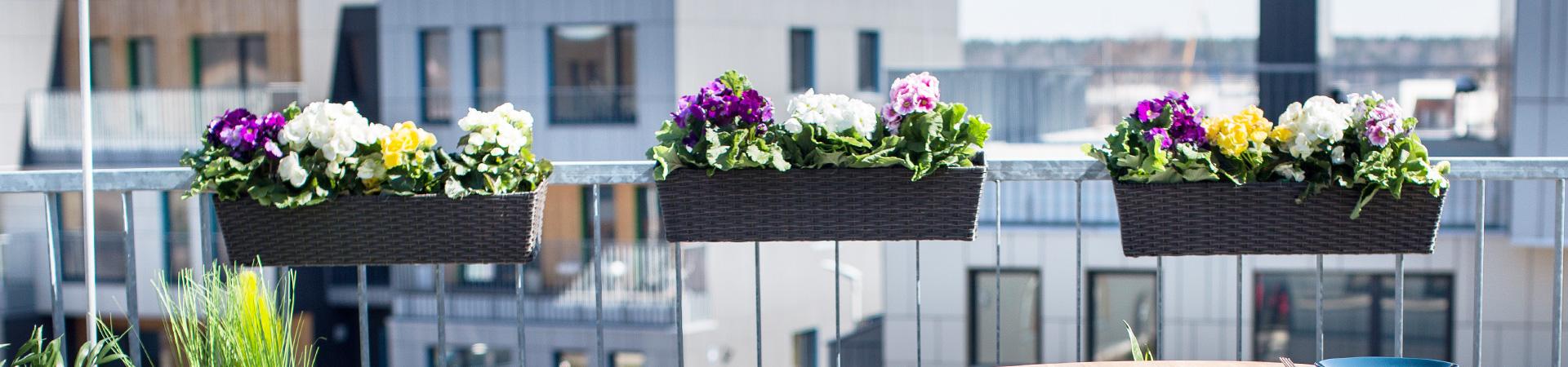 Gėlių vazonai